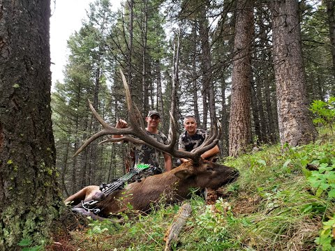 Archery Elk Hunt In The Back-country Of Montana.