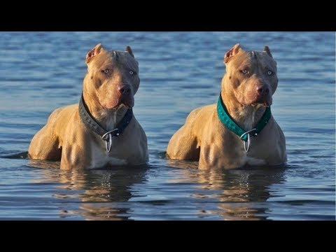 10 BEST WATER DOG BREEDS