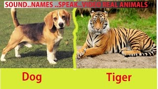 Learning Animals SOUNDS and NAMES  For Kids And Babies | Learn to talk Animals Names for toddlers