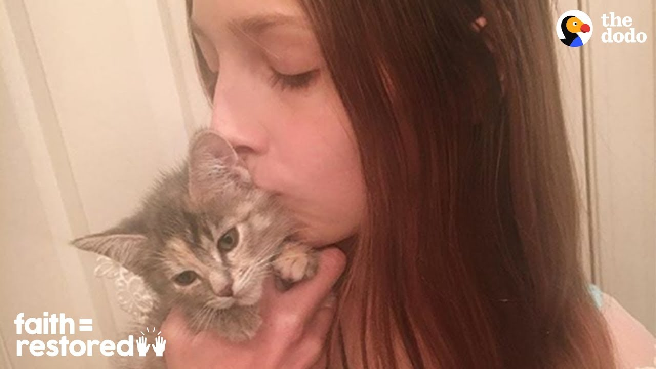 12-Year-Old Girl Fosters Kittens Nonstop | The Dodo Faith = Restored