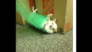 Funny Animals Compilation (Cats, Dogs, Monkeys...) LOL