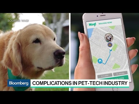 Why the 'Uber for Dog-Walking' Is Under Scrutiny