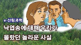 [e-산림과학] 국내 낙엽송의 유전자다양성을 조사했다