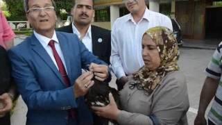 'نسر' يحتمي بديوان محافظة كفر الشيخ من قطيع 'غربان' (فيديو وصور)