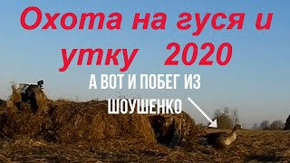 """№82 Побег гуся из """"Шоушенко""""! Собаки в ШОКе!  Охота на гуся и селезня 2020 г. будет лучше, чем 2019!"""