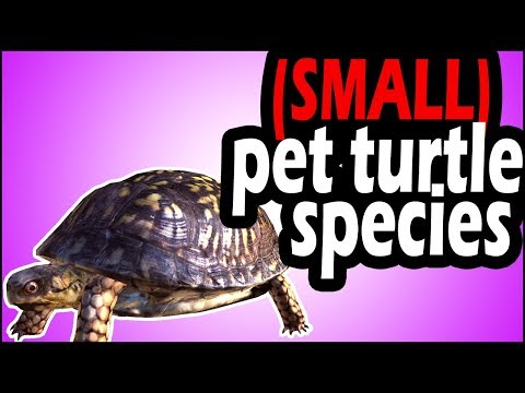 Pet Turtle Species That Stay Small: 3 (Rare) Species