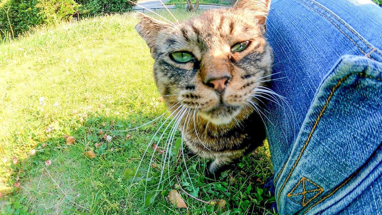 野球場の裏で見掛けた野良猫、近づくと足元に擦り寄ってきてカワイイ
