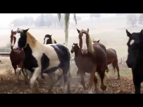 Beautiful Rescue Horses Run By