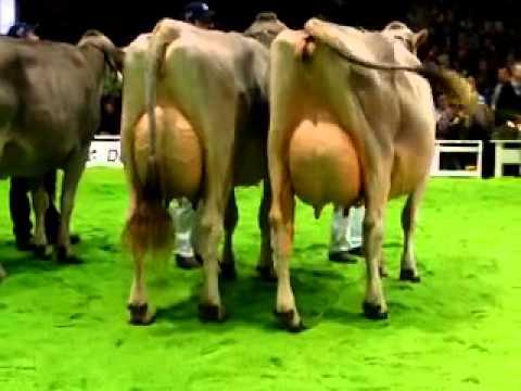 Bruna 2012_Aufstellung Euter-Championwahl