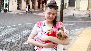 Путешествие с собакой на море в Италию//Йорк в Сан-Ремо //Площадка для собак//В ресторане с собакой