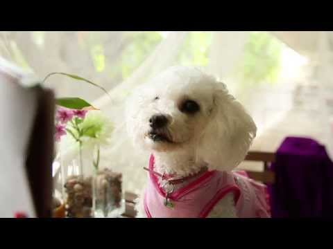 You Must Love Dogs Dating - Dating Tips - Build Your Best Online Dating Profile - from YouTube · Duration:  1 minutes 31 seconds