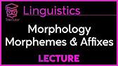 Data Analysis - Morphological Trees, VLC Series #1 - YouTube