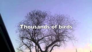 Thousands of birds flying away in seconds
