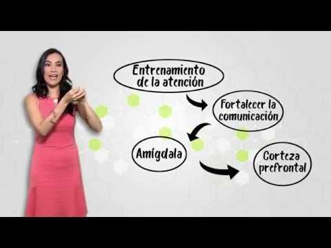¿Qué es la atención? ¿Cómo funciona?
