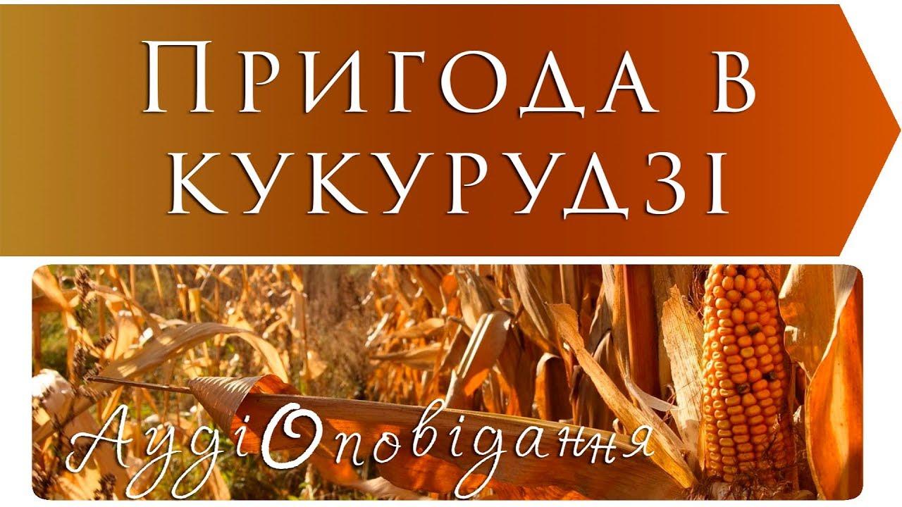 Книги всеволода нестайко. Рассказы, произведения, сказки. Купить в интернет-магазине yakaboo. Ua. Самый большой в украине интернет магазин.