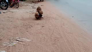 The Биты - Коты и собаки