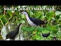Suara Pikat Burung Ruak Ruak Paling Mantap  Mp3 - Mp4 Download