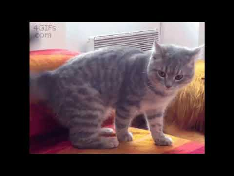 Funny Cats Clips in 30 Seconds1