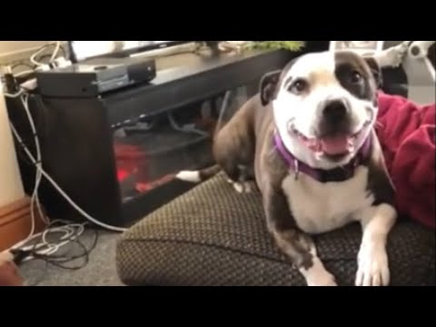 Baby can't stop laughing at dog popping bubbles