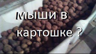 видео Борьба с мышами в каркасном доме (дополнение)