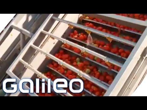 Dosentomaten aus China | Galileo | ProSieben
