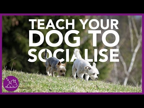 how-to-socialise-a-new-dog-|-dog-training