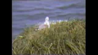 Tønes - Dråba i sjøen