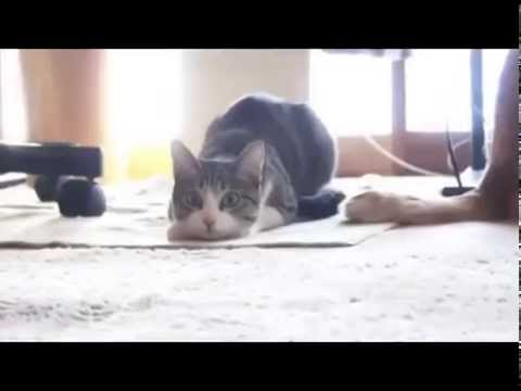 Epic Cat Dance – Funny Cat Video 2014