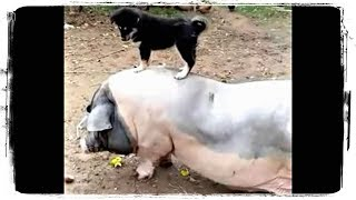 СМЕШНЫЕ ЖИВОТНЫЕ, КОТЫ, СОБАКИ и ДРУГИЕ | FUNNY ANIMALS, CATS, DOGS, and OTHERS #612