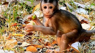 Very adorable newborn monkey, Love your stand performance, Very lovely newborn monkey