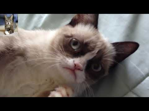 Funniest cat compilation