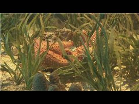 Marine Life : What Does A Starfish Eat?