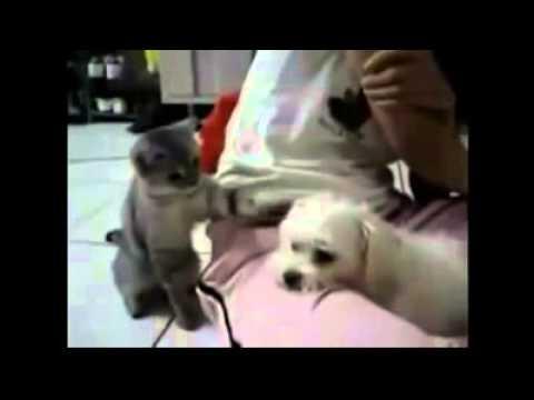 Hunde Vs Katzen Youtube