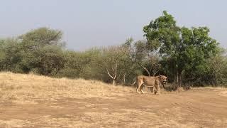 safari park ambardi dhari