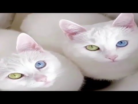 Baby Cats - Cute and Funny Cat Videos Compilation | Cute Kittens Meowing | FunFlix Entertainment