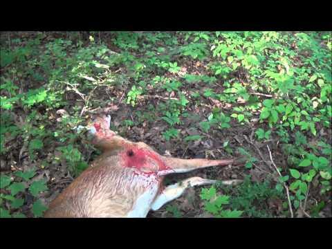 Deer Hunt 23 Savage M111 LRH 7mm Mag