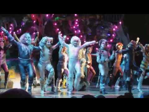 cats 2017 oasis of the seas highlights