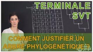 Comment justifier un arbre phylogénétique ?