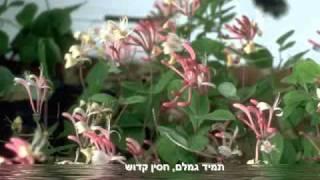 אנא בכח - עובדיה חממה - מצגת שיר תפילה