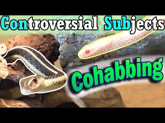 con-sub-can-you-cohab-snakes