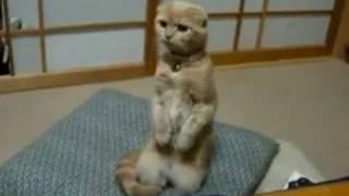 Funny Cats - Смешные кошки - Лучшие коты 2010 года