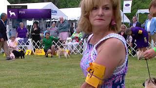Pugs   Breed Judging 2021