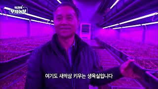 역전의 부자농부 71회 - 새싹삼