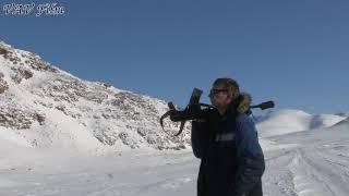 видео Снежный баран или чубук Сибири