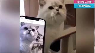 Сам с собой!  - Эти Забавные Животные!!! / Видео