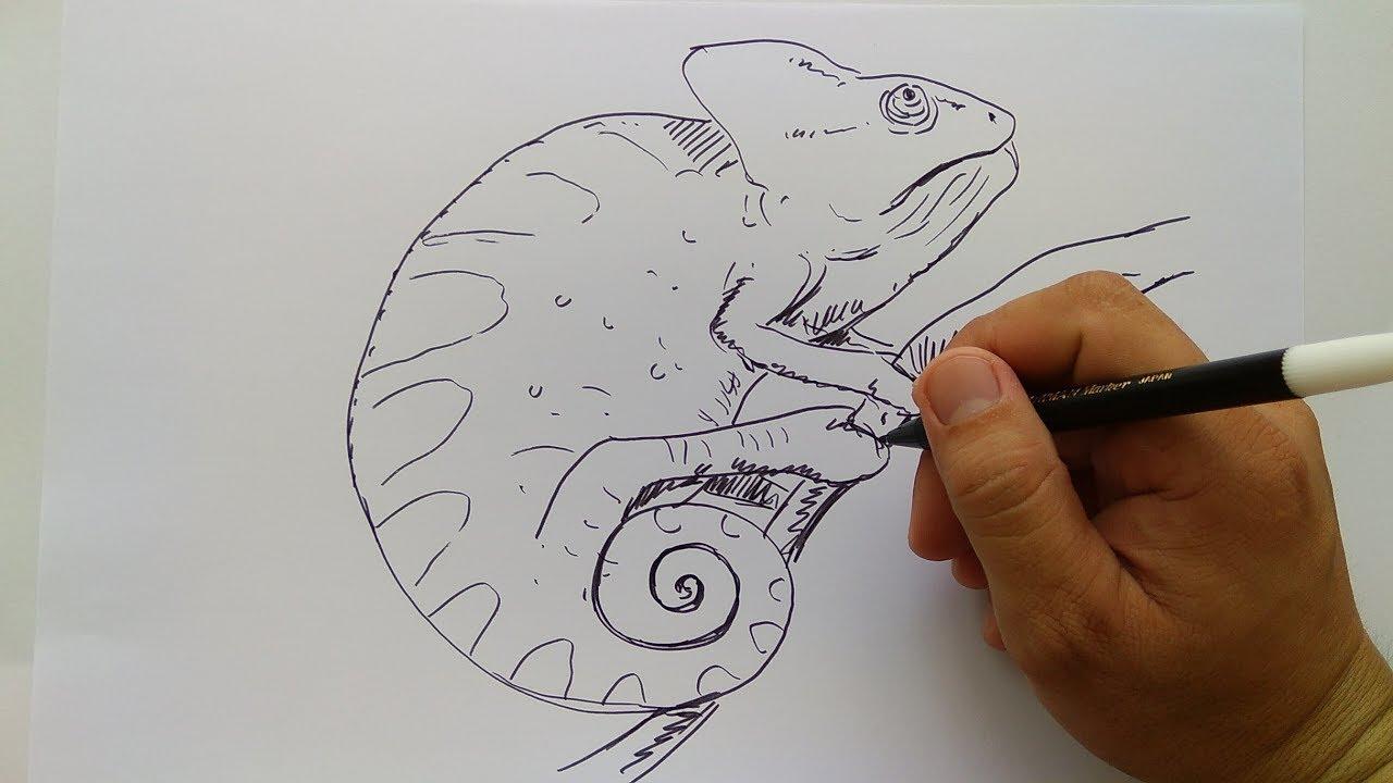 Cara Menggambar Bunglon