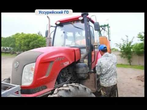Новые сорта элитного картофеля выращивают в Приморье
