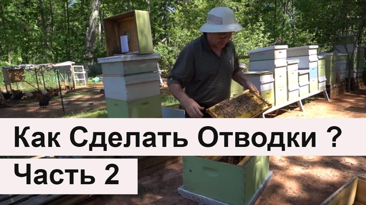 Как сделать отводок пчел без матки фото 158