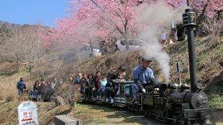 20140308まつだ桜まつり2014 PART2(ふるさと鉄道のミニSLとロマンスカー)