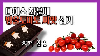 [베란다텃밭] 방울토마토가 먹고싶으니까! 방울토마토를 …